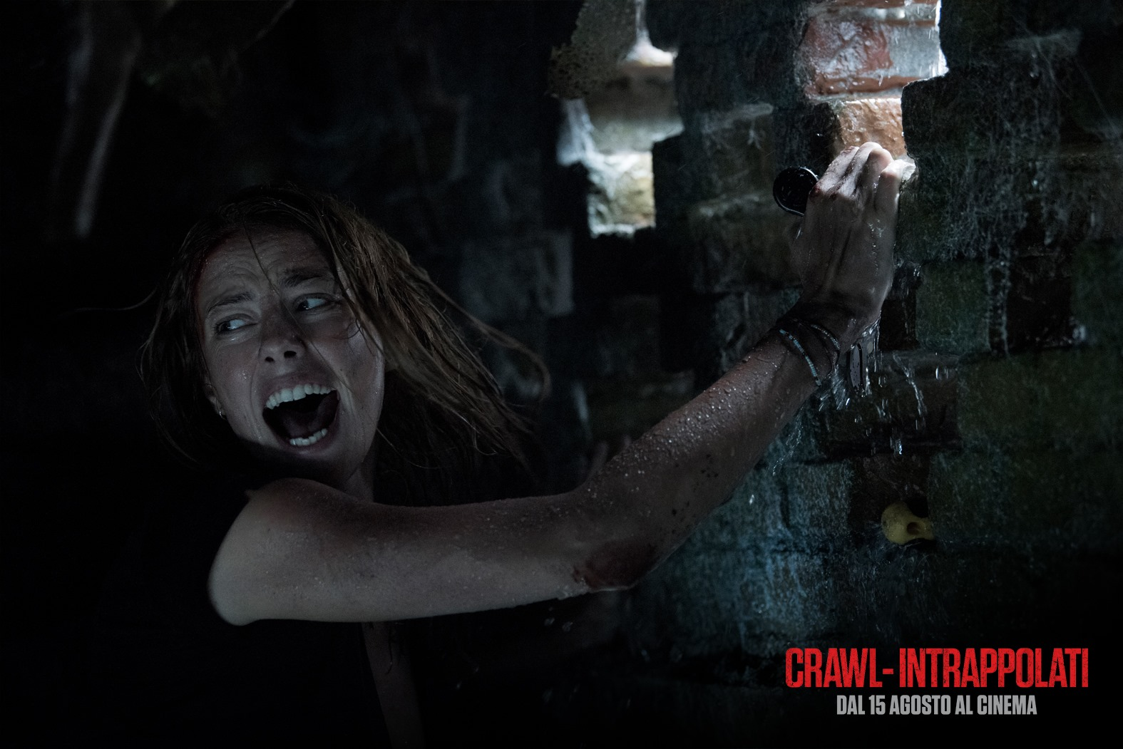 Crawl - Intrappolati | Immagine dal film